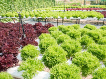 Vegetables hydroponics system Stock Image