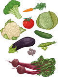 Vegetables I. First set of 10 vector illustration of vegetables (broccoli, carrots, cauliflower, tomatoes, cabbage, eggplant, cucumber, beans, peas and beets Stock Images