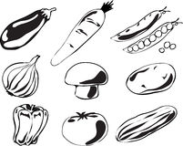 Vegetables illustration Stock Image
