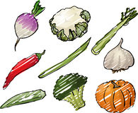 Vegetables illustration Stock Photos