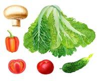 Vegetables illustration Stock Photos