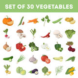 Vegetables illustration set. Royalty Free Stock Photo