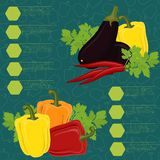 Vegetables infographic on the seamless background Stock Image
