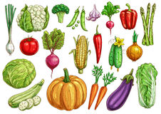 Vegetables isolated sketch set with fresh veggies Stock Images