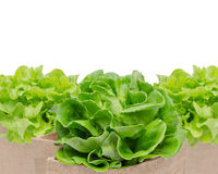 Vegetables isolated on white background Royalty Free Stock Photo