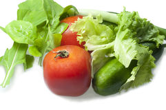Vegetables isolated on white. Tomatoes, Cucumber, Green onion, Salad isolated on white Stock Images