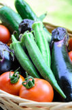 Vegetables just harvested in basket Royalty Free Stock Photos