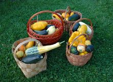 Vegetables from a kitchen garden. Fresh vegetables from a kitchen garden stand in baskets on is juicy to a green grass Royalty Free Stock Photography