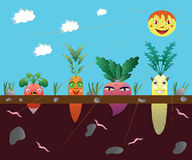 Vegetables on a kitchen garden. Stock Images