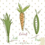Vegetables in kitchen set. Colorful leek, carrot. Vegetables  kitchen set. Colorful leek, carrot and peas hand drawn colorful splash hand drawn Stock Photography