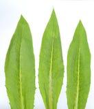 Vegetables leaf Stock Photo