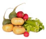 Vegetables lie on a table. Turnip, celery, garden radish, radish lie on a table Stock Image