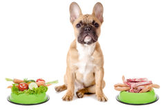 Vegetables or meat for the dog. A dog has the choice between meat or vegetables before white background Royalty Free Stock Images
