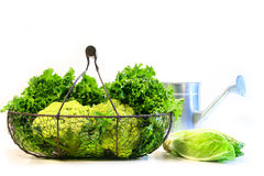 Vegetables in a metal basket royalty free stock photography
