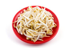 Vegetables: Mung Bean Sprouts Stock Photos