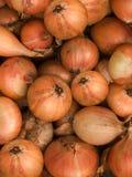 Vegetables  onions Stock Photo