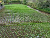 Vegetables plantation Royalty Free Stock Images