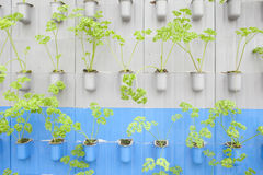 Vegetables planting in modern farm Stock Photography