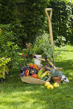 Vegetables and plants. Vegetables harvest and plants in a garden Stock Image