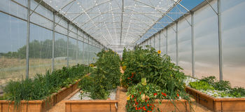 Vegetables Plants Growing In A Greenhouse Royalty Free Stock Photo