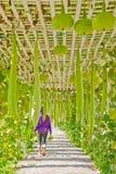 Vegetables plating in modern farm, Thailand Stock Photo