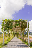Vegetables plating in modern farm, Thailand Stock Image