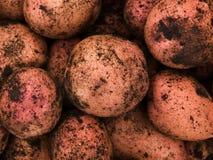 Vegetables  potato Stock Photo