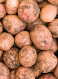 Vegetables a potato tubers Royalty Free Stock Image