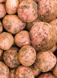 Vegetables a potato tubers Stock Images