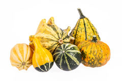 Vegetables of pumpkin decorative isolated on white background Stock Image