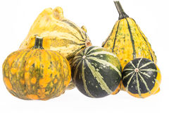 Vegetables of pumpkin decorative isolated on white background Stock Photography