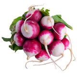 Vegetables radish isolated Royalty Free Stock Image