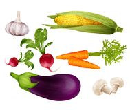 Vegetables realistic set Royalty Free Stock Photography