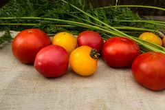 Vegetables red and yellow tomatoes on a gray napkin. Farmer`s natural vegetables from beds and greenhouses red and yellow tomatoes on a gray napkin Stock Photography