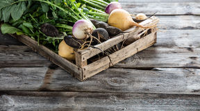 Vegetables with roots in wooden crate for genuine sustainable agriculture. Mix of turnips and black radishes for fresh green vegetables with roots set in crate stock photos
