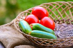 Tomatoes and cucumbers in basket Royalty Free Stock Image