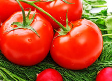 Vegetables for salad Stock Image