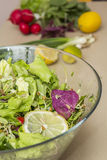 Vegetables salad. Fresh lettuce, radishes and other vegetables Royalty Free Stock Photo