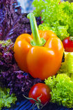 Vegetables for salad Royalty Free Stock Photography