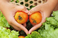 Vegetables salad and tomato - patterns heart in hand.  Royalty Free Stock Photos