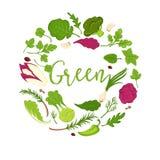Vegetables, salads and green veggies vector icons. Vegetables, salads and vegetarian veggies poster. Vector design lettuce salads, cauliflower and arugula Stock Image