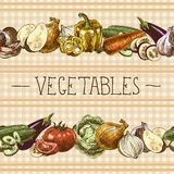 Vegetables seamless pattern border royalty free illustration