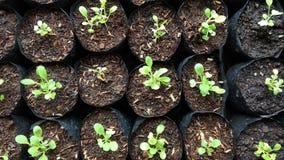 Vegetables seeding Stock Image