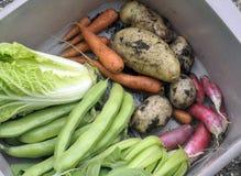 Vegetables stock photos