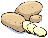 Vegetables series: potatoes. Colorful illustration of potatoes on white background royalty free illustration