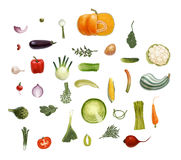 Vegetables sesign set. Hand-drawn vector vegetables,  on transparent background - tomato, spinach, vegetable marrow, corn, rosemary, green peas and beet olive Royalty Free Stock Image