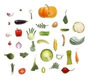 Vegetables sesign set Royalty Free Stock Image