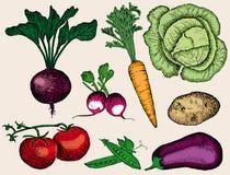 Vegetables set Stock Photography