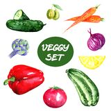 Vegetables set illustration, fresh veggy food for illustration of menu, cooking books, making stickers, cards