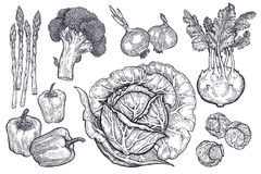 Free Vegetables Set. Vintage Graphics. Royalty Free Stock Image - 96072636